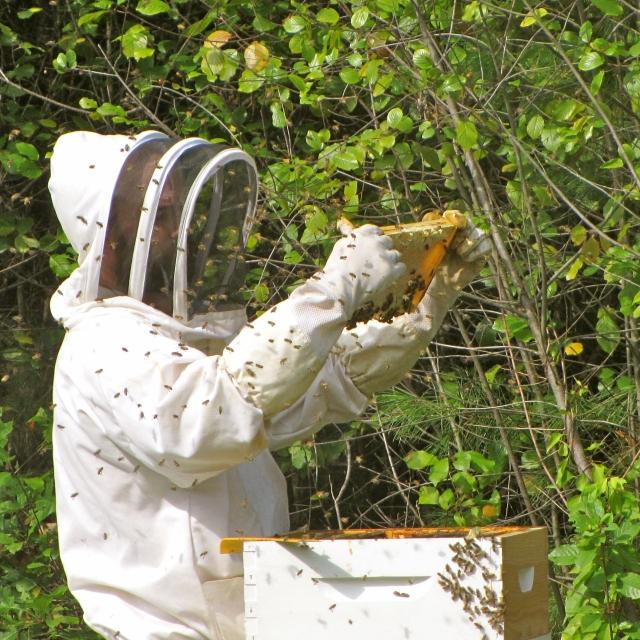 stonyhillfarm_beekeeping