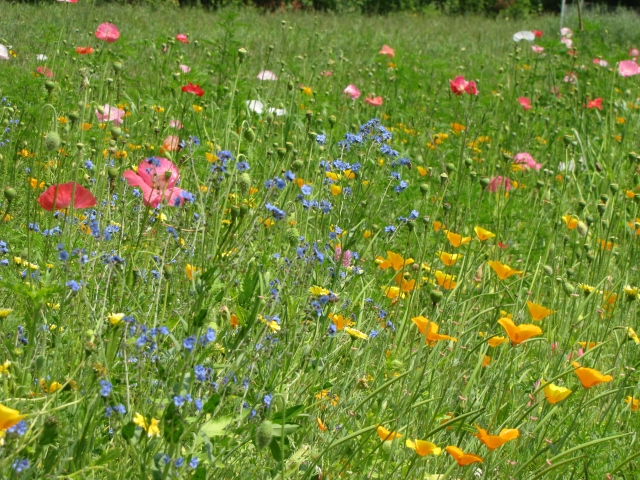 stonyhillfarm_wildflowers